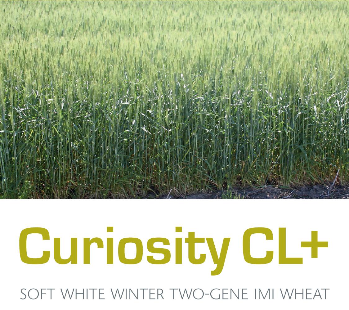 Curiosity-CL-