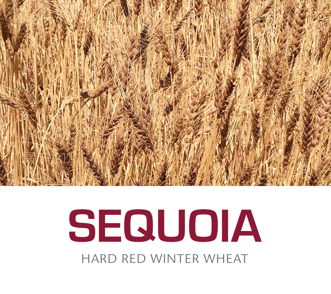 ALUM - Hard Red Spring Wheat