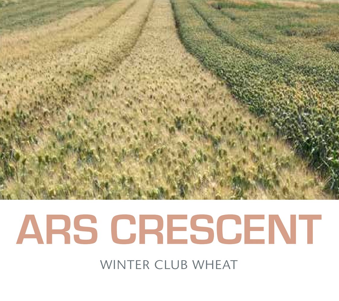 ARS Crescent - Winter Club Wheat