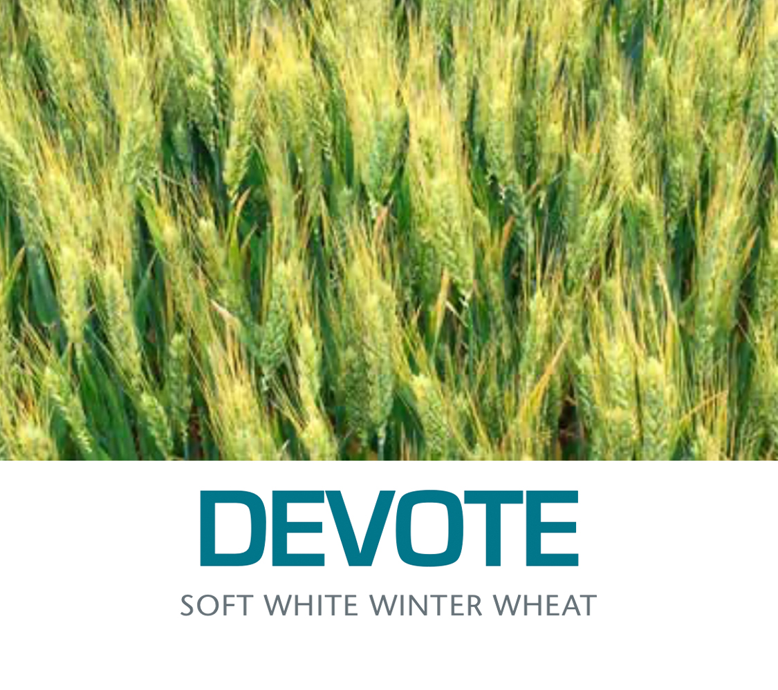 DEVOTE - Soft White Winter Wheat