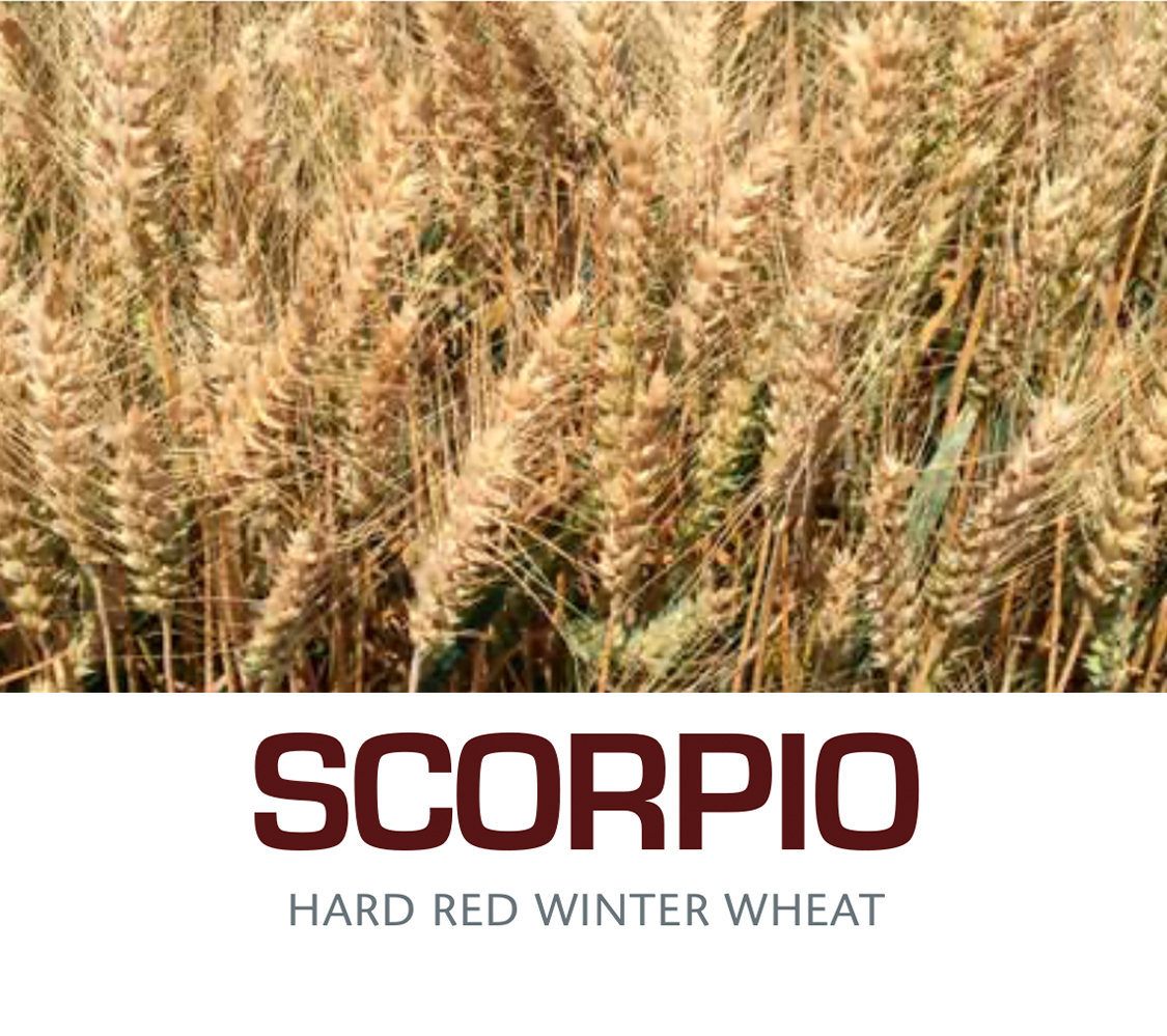 SCORPIO - Hard Red Winter Wheat