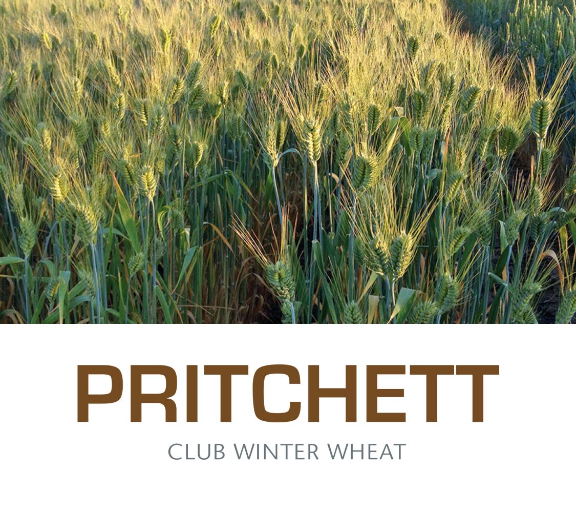 Pritchetttitle